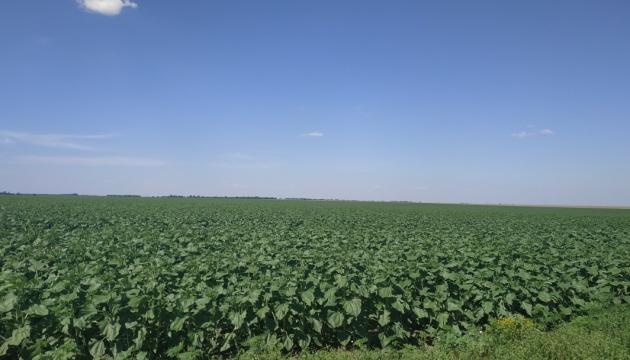В Україні виявили 10 тисяч гектарів землі, яку обробляють незаконно
