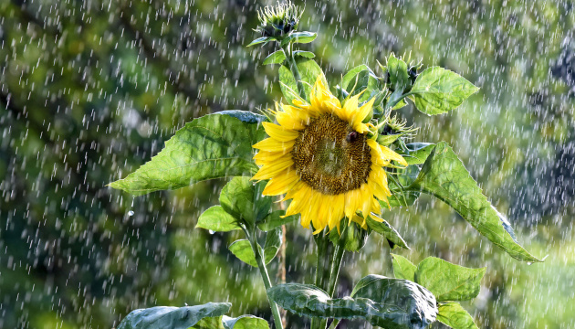 В Україну йдуть короткочасні дощі з грозами