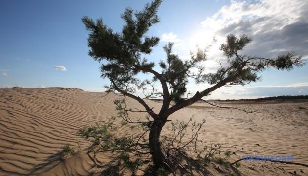 ONU : La désertification et la sécheresse déstabilisent le bien-être de 3,2 milliards de personnes