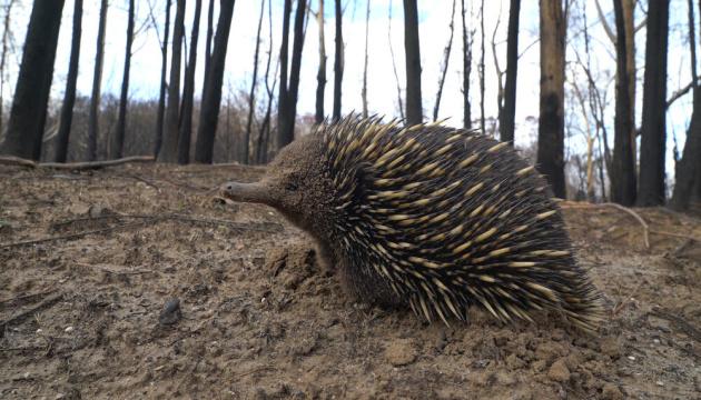 В Австралії від пожеж постраждали три мільярди тварин - вчені