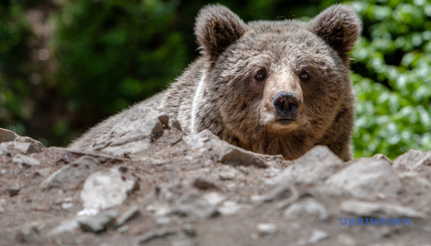 Як зупинити війну людей і ведмедів