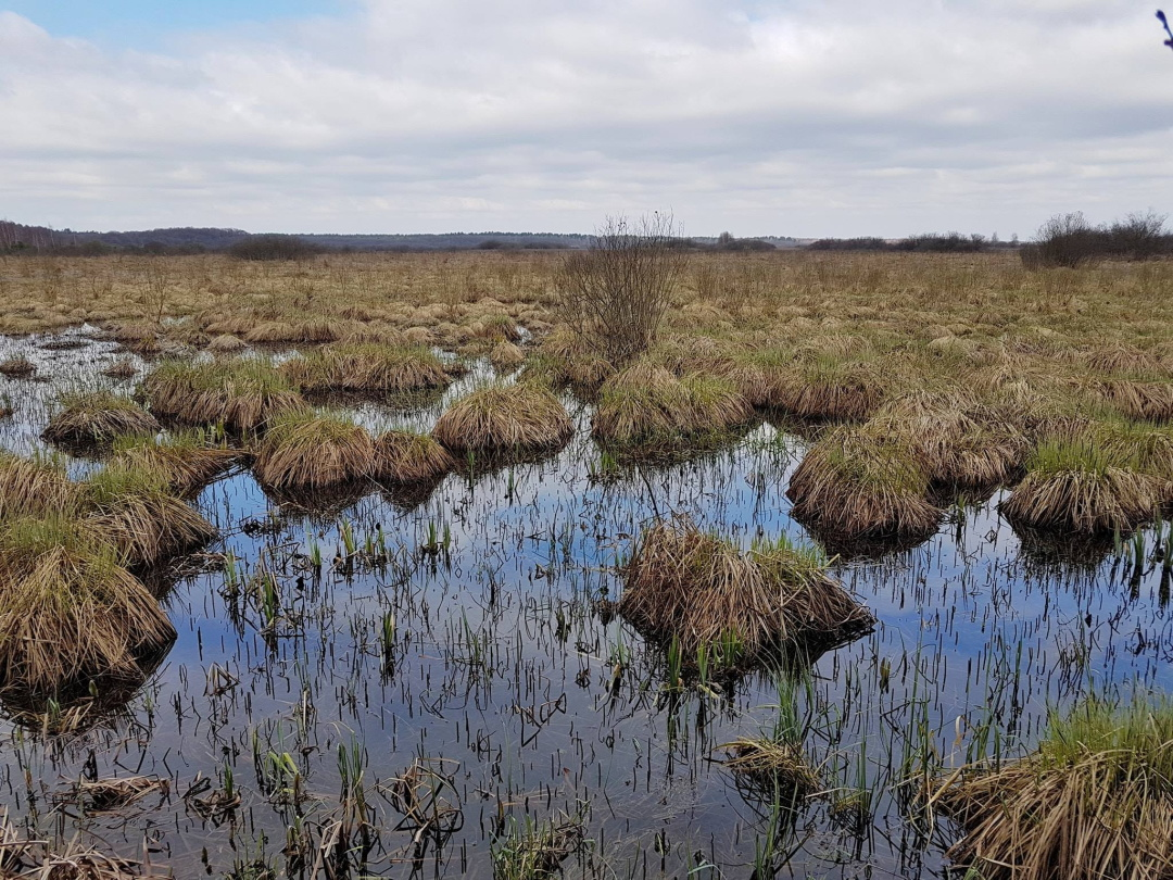 Бондарівське болото навесні