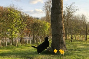 Кіт британського МЗС вийшов на пенсію