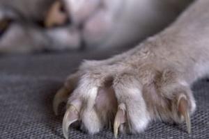 Хвора на сказ кішка вкусила чоловіка у Києві