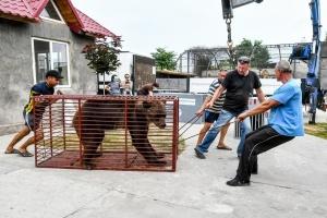 Конфіскованим ведмедям із Покровська знайшли нове житло