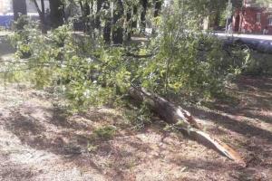 В Днипре непогода остановила транспорт и повалила 50-летние ели