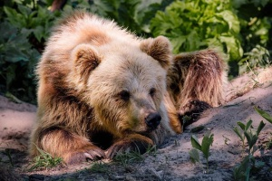 """В медвежий приют во Львовской области перевезли двух """"переселенцев"""" с Донбасса"""