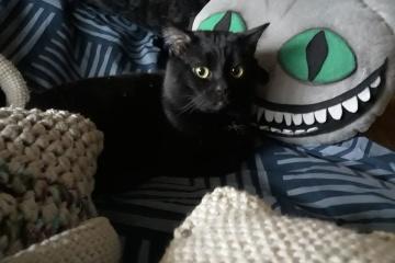 Aujourd'hui marque la Journée internationale du chat noir