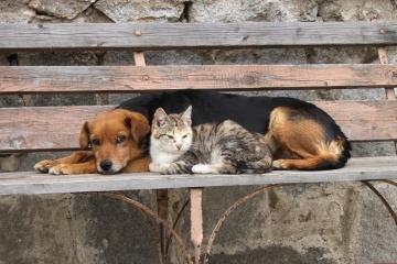 Aujourd'hui, c'est la Journée mondiale des animaux sans abri