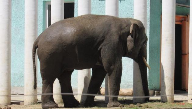 У Миколаївському зоопарку відсвяткували ювілей слона Дінкара