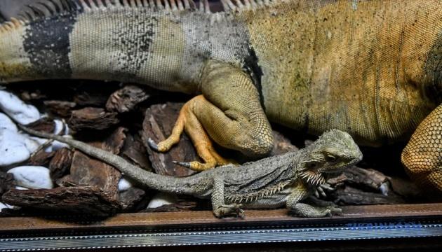 """У бердянському зоопарку """"Сафарі-парк"""" відкрився тераріум"""