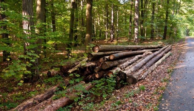 За незаконные рубки будут отвечать лесхозы - экоинспекция