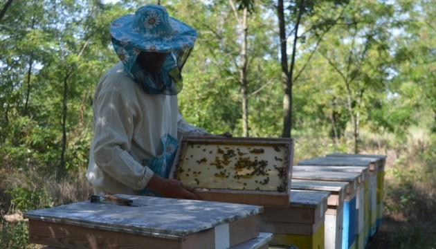 Херсонський мед: крафтова продукція та експорт