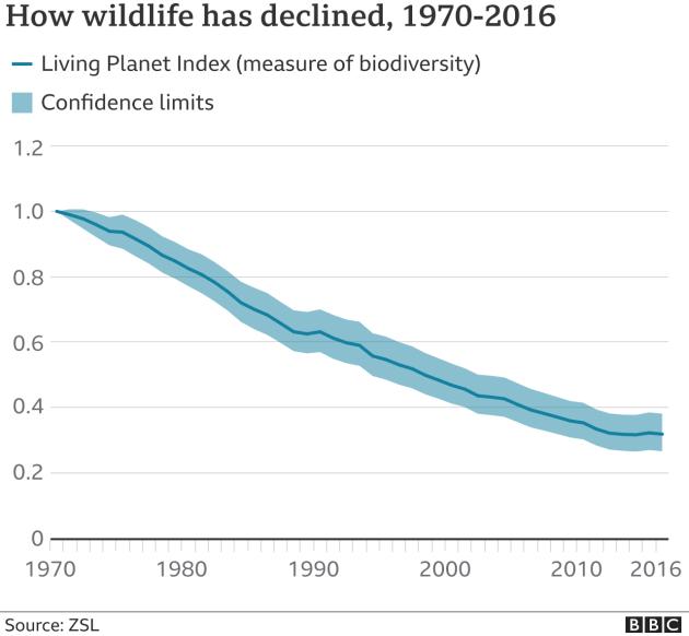 Популяции диких животных сократились более чем на две трети за 46 лет