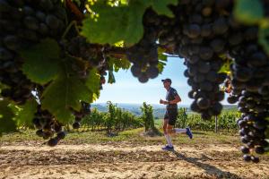 У Мінекономіки презентували концепцію розвитку виноградарства