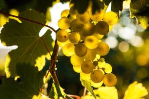 В Ужгороді відкрили нову туристичну атракцію — Виноградну гору
