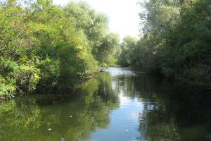 До Ковалівського лісу на Миколаївщині курсуватиме водний експрес