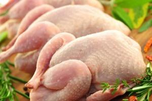 Три птахофабрики МХП пройшли аудит на підтвердження вирощування птиці без антибіотиків