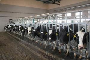 В Україні зменшилося виробництво молока