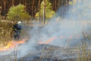 Лісова пожежа на Луганщині: евакуюють жителів двох сіл