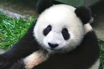 El número de animales salvajes en el mundo ha disminuido en un 68% desde 1970. En Ucrania, incluso no han contado…