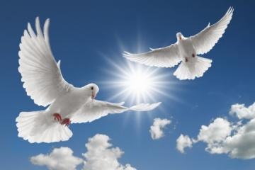 Aujourd'hui marque la Journée Internationale de la paix