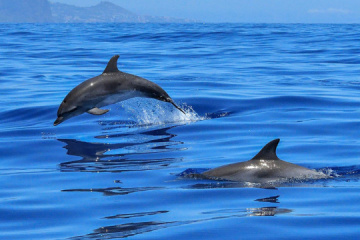 Les gardes-frontières ont sauvé un dauphin dans la mer d'Azov