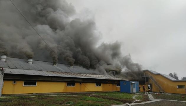 На Прикарпатье горела свиноферма с 30 тысячами животных