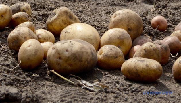 Украинское картофелеводство: бизнес или сизифов камень