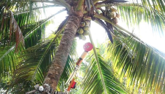 В Індії створили робота, який збирає кокоси на деревах