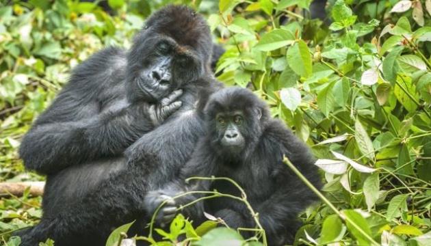Популяції диких тварин скоротилися більш ніж на дві третини за 46 років