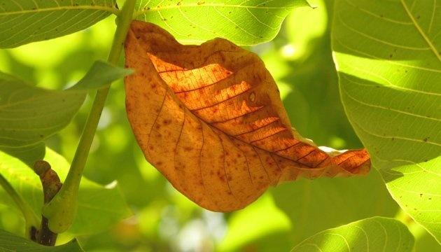 18 сентября: народный календарь и астровисник