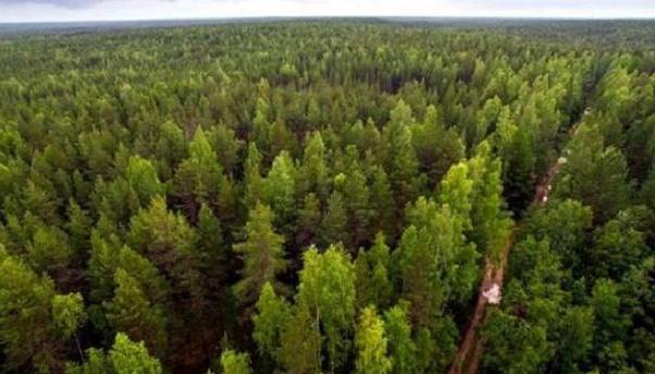 На Хмельниччині висадять молодий ліс на 560 гектарах