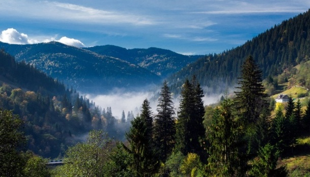 Carpathian region in danger due to deforestation - UN