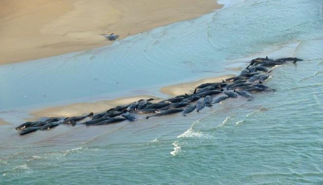 Вследствие массового выброса китов в Австралии погибли уже 380 животных