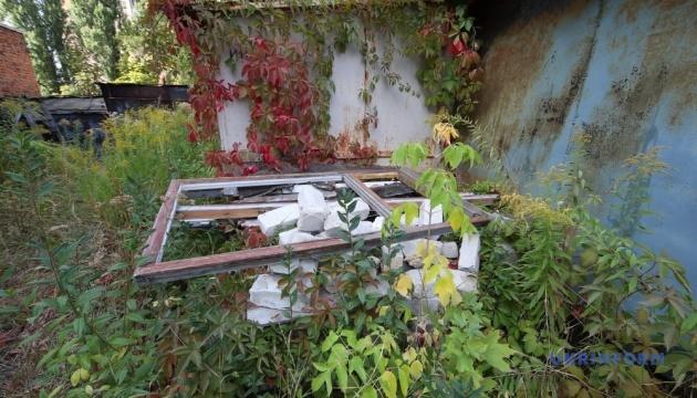 Шкідливі вікна на траві