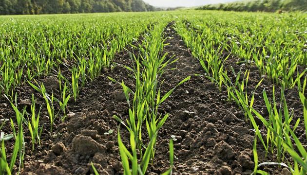 Ukrainian farmers already sown winter grains on 27% of planned area