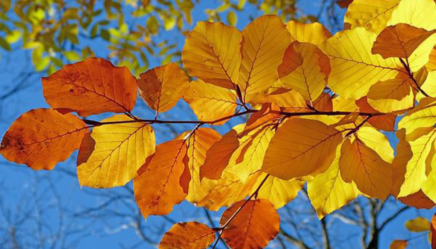 1 жовтня: народний календар і астровісник