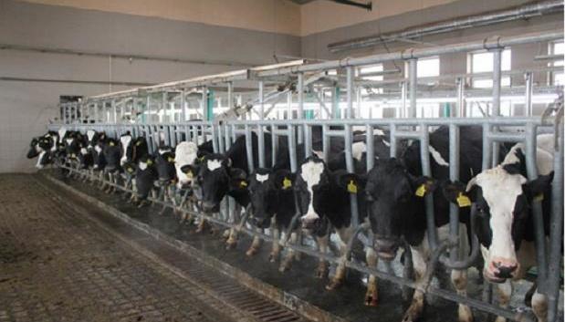 Фермерским хозяйствам насчитали 71,6 миллиона компенсаций