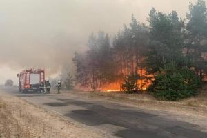 В ОП отреагировали на информацию об обстреле оккупантов, что мог повлечь лесные пожары