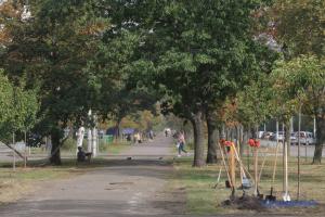 У Києві з'явилась найдовша в Україні алея сакур