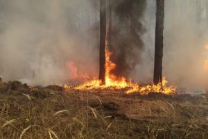 Луганщина попросила міжнародних донорів про допомогу постраждалим від пожеж