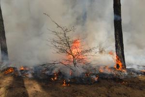 Пожежі на Луганщині: ДБР розслідує службову недбалість керівництва ДСНС