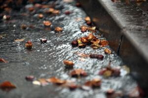 Перший день листопада в Україні буде холодним і дощовим