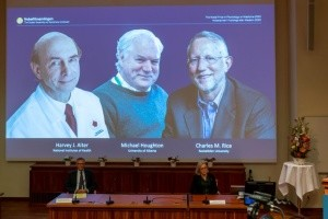 Охота на вирусы. За что дали медицинский Нобель-2020?
