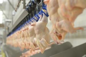 Курятина від МХП за рік подешевшала на 11%