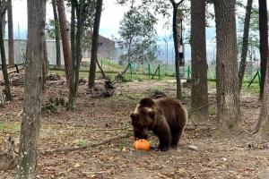 """Медвежий приют """"Домажир"""" зовет на """"тыквенные выходные"""""""