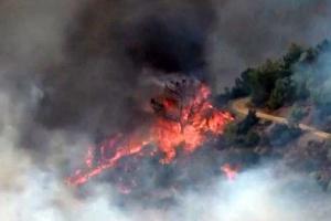 На півдні Туреччини горить ліс, людей евакуюють