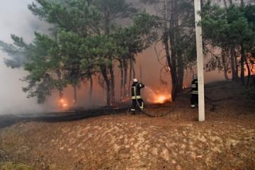 Un violent feu ravage la forêt dans la région de Louhansk, au moins 5 personnes ont péri