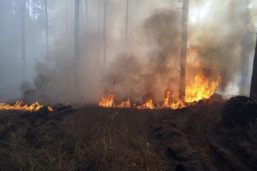 «Слуги народу» хочуть створити ТСК у Раді для розслідування пожеж на Луганщині